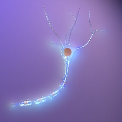 3d nerve cell neurone