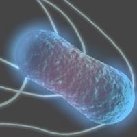 3d model salmonella bacteria