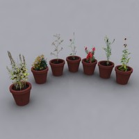 potted flowers plants 3d max