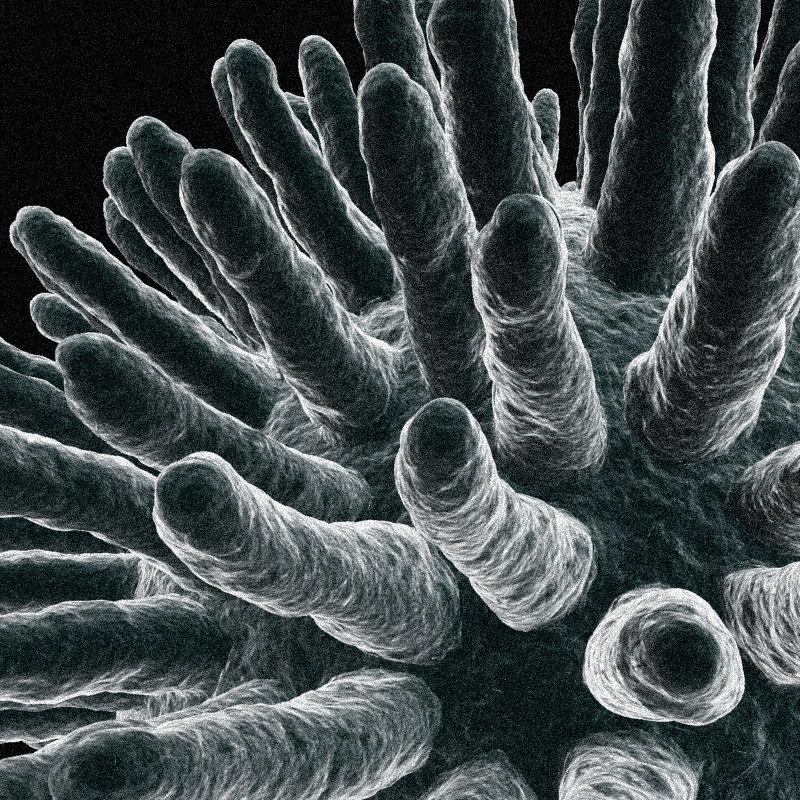 virus electron microscope 3d max