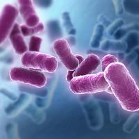 Bacteria Set [Bacillus2]