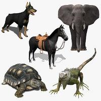 animal 1 3d model