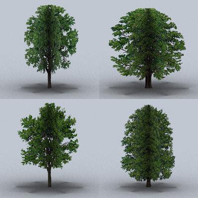 large trees 3d model