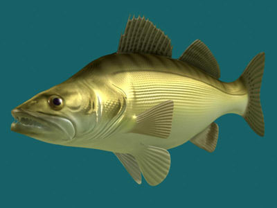 3ds max walleye stizostedion vitreum