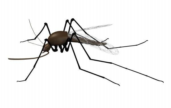 mosquito 3ds