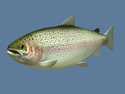 rainbow trout max