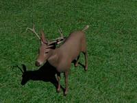 3ds max deer buck