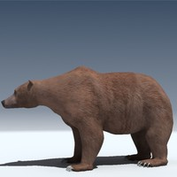 grizzly bear obj