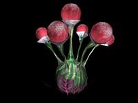 maya bulb plant