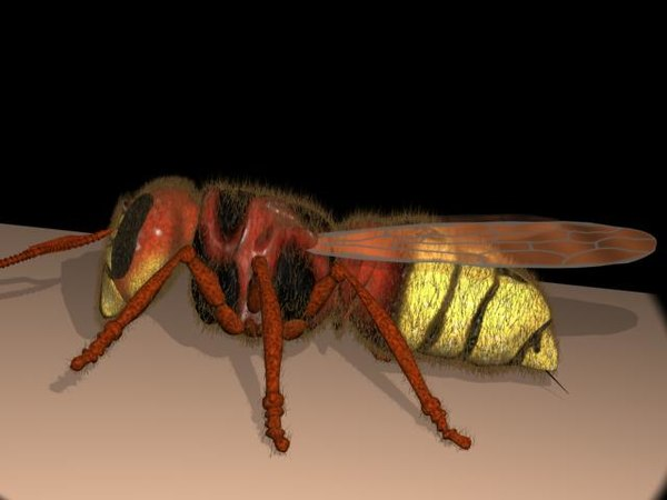 3d hornet wasp model