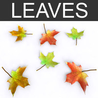 3ds max fallen leaves fall