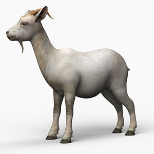 max goat