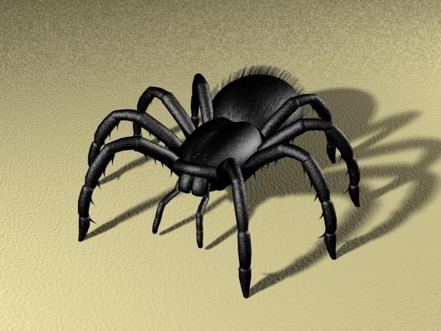 maya tarantula