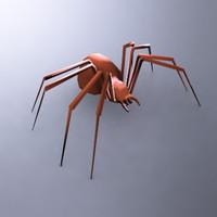 maya spider arachnids