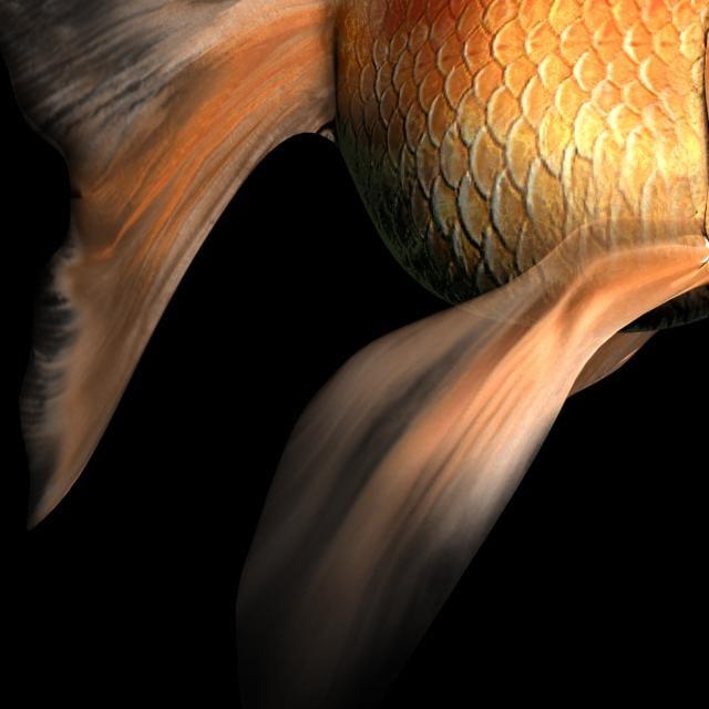 free max mode goldfish gold fish