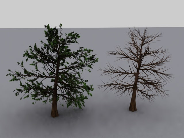 elm tree max