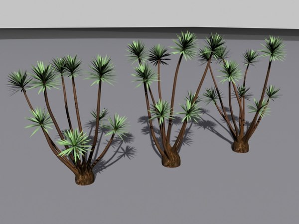 palm tree yucca 3d model