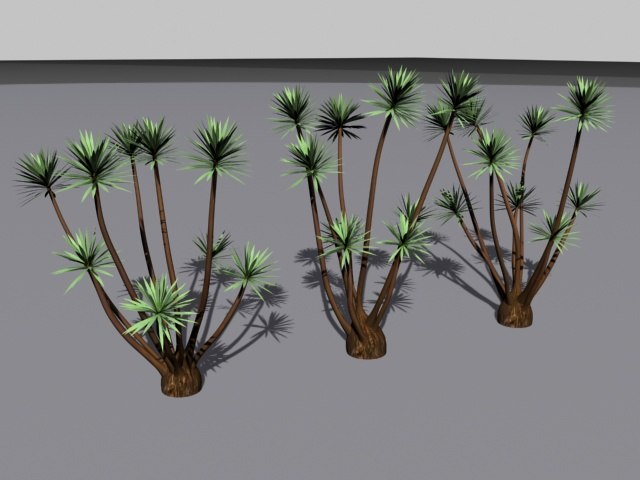 palm tree yucca 3d model