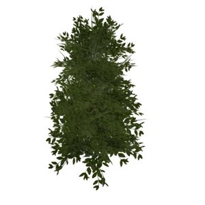 ligustrum bush 3d model