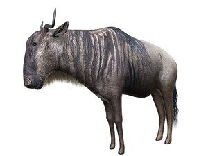 max gnu savanna