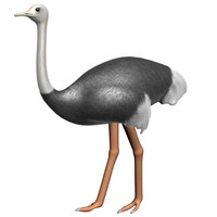 3d ostrich animal savanna model