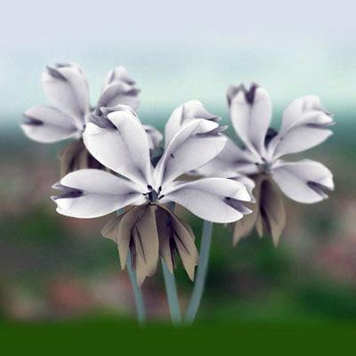 white flower max