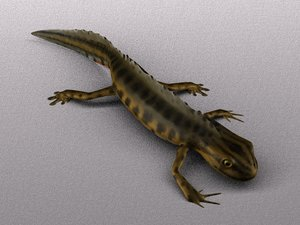 common smooth newt 3d model