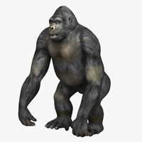 3d gorilla monkey model