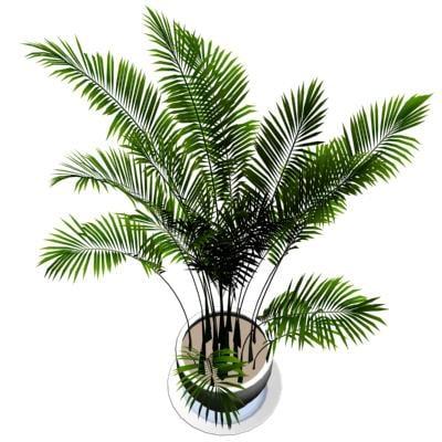 3d palm plant