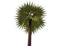 palm 2.max