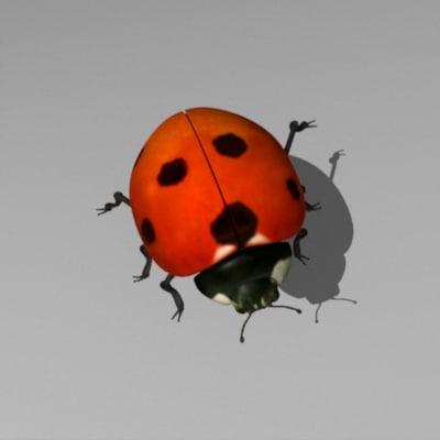 3ds ladybug beetle