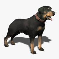 terrier rottweiler boxer 3d model