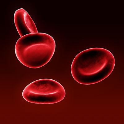 blood cells red 3d model