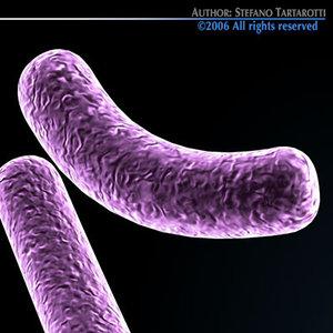 3d model bacillus bacteria bacterial cell