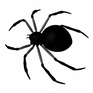3d spider arachnid