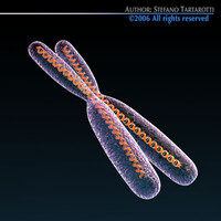 3d model chromosome dna