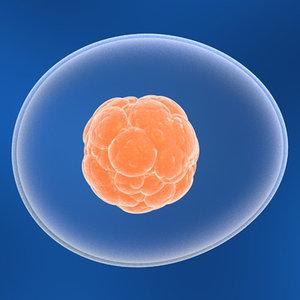 stem cell 3d model