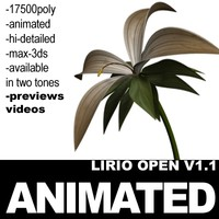 Animated Lirio Open Hi-Poly