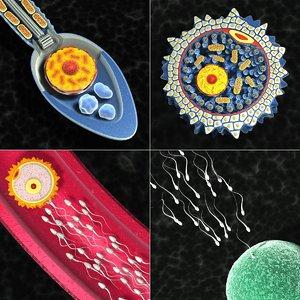 sperm ovum 3d model