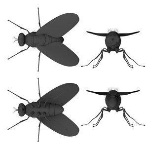 flies housefly 3d model