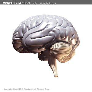 morelli russi human brain 3d model