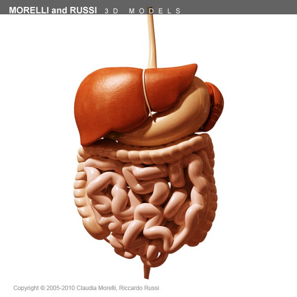 morelli digestive mr 3d model