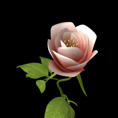 rose flower branch 3d model