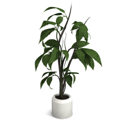 ornamental potted plant max