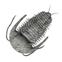 trilobite.3ds