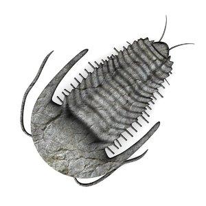 trilobite tri 3d model