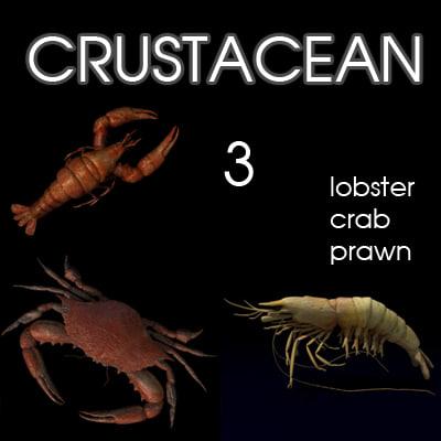 3d model crustacean prawn lobster crab