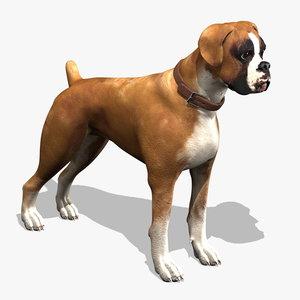 boxer puppy 3d model