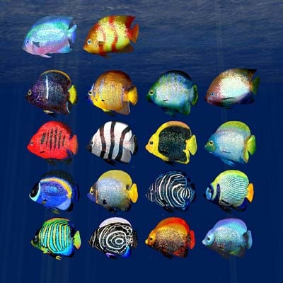3ds max tropical fish 2