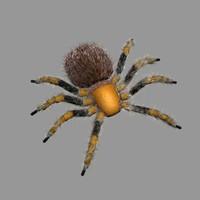 tarantula.max